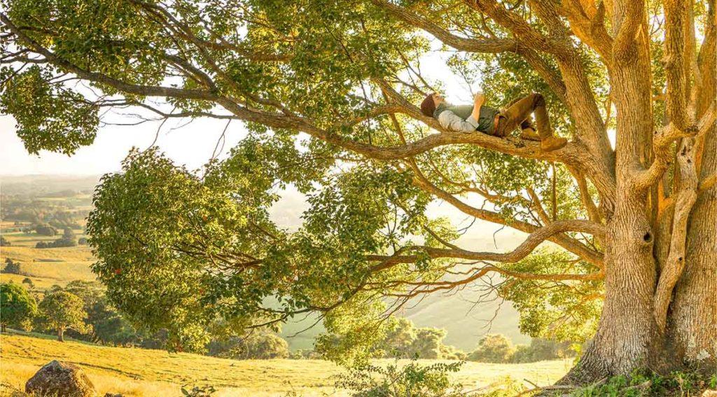 夕暮れに差し掛かる前の太陽の光の中で、大きな木の上で昼寝している男性