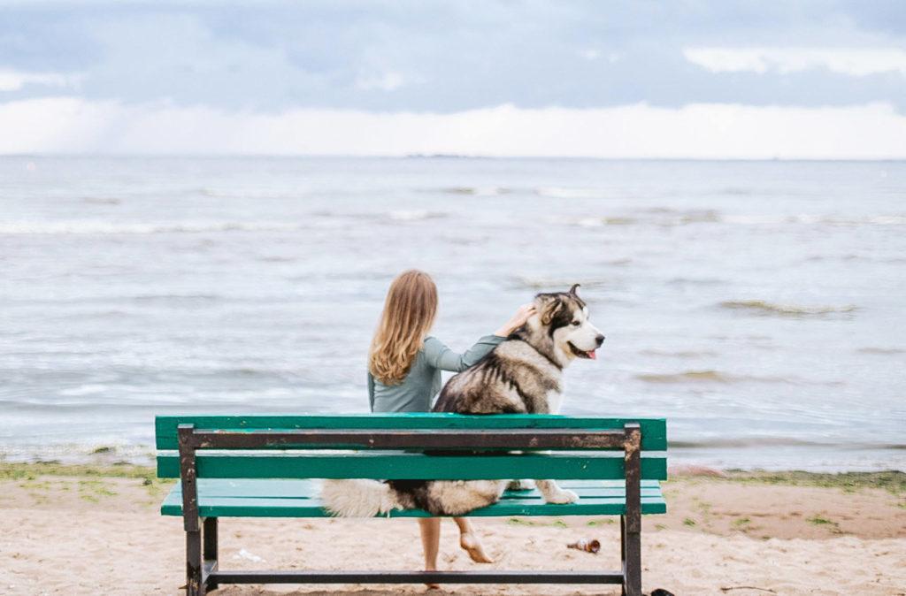 シベリアンハスキーとベンチに座って海を見つめる10歳くらいの女の子