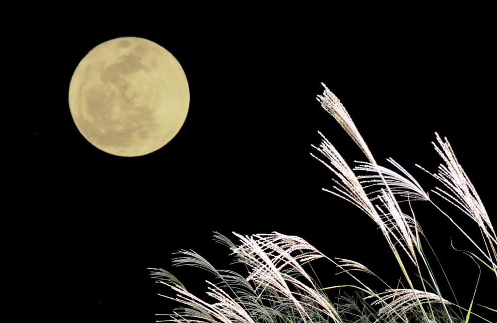 すすきと満月の写真