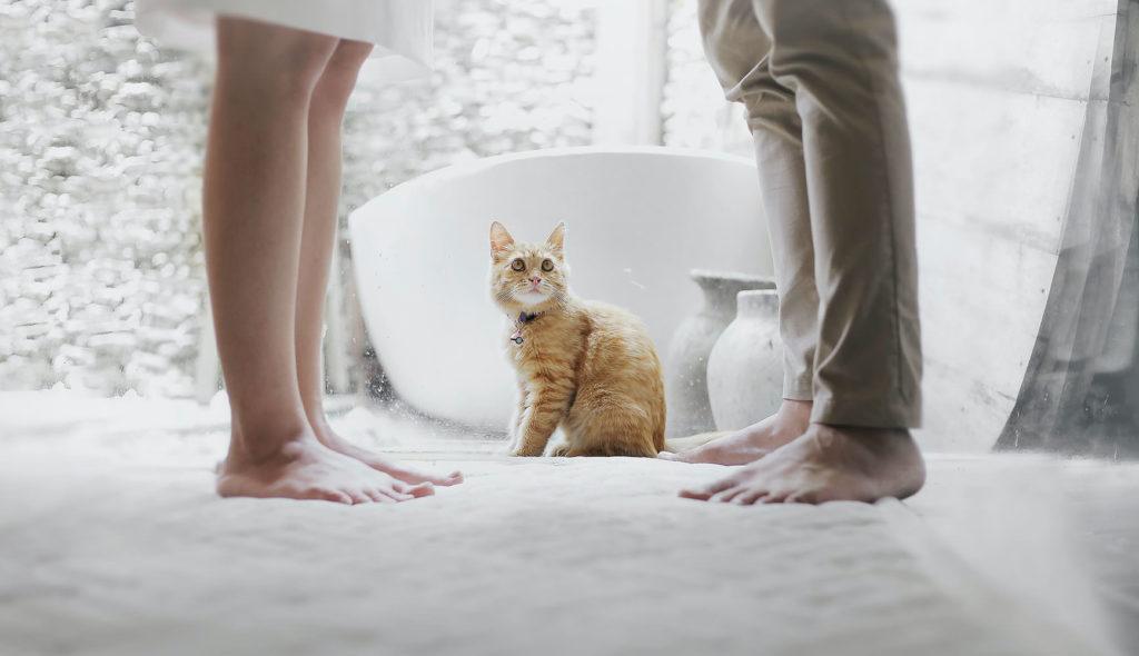 向き合っている男女の足元で猫が二人を見つめている足元の写真