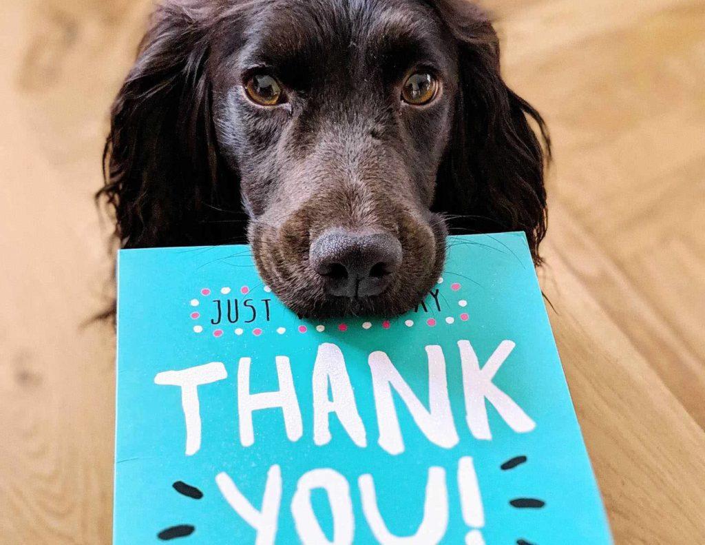 Thank you カードを口にくわえて差し出す犬の写真