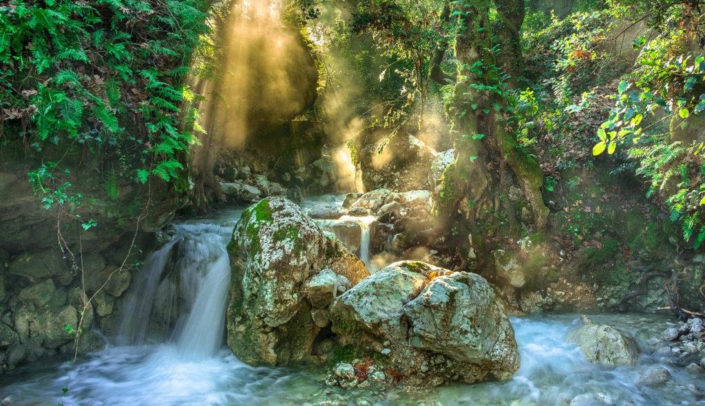 光の差す森の中を流れる小川の写真