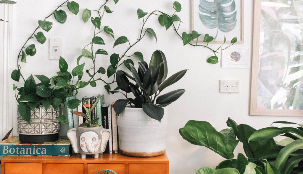 棚に置かれた植物や吊る植物の写真