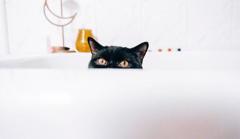 バスタブから覗き見する黒猫の写真