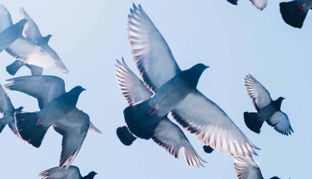 青い空に羽ばたく鳥